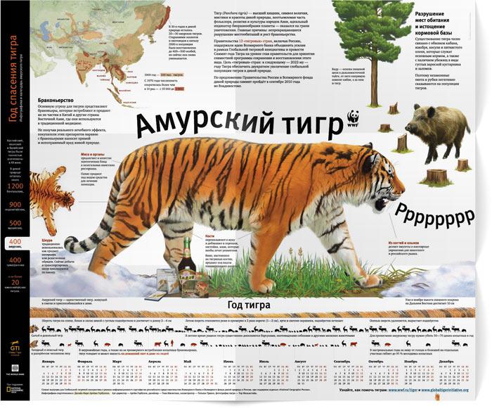 письмо браконьеру про амурского тигра термобелье для женщин